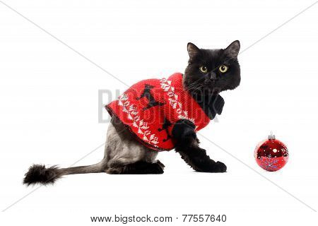 black cat wearing in a red cardigan with Christmas Ball