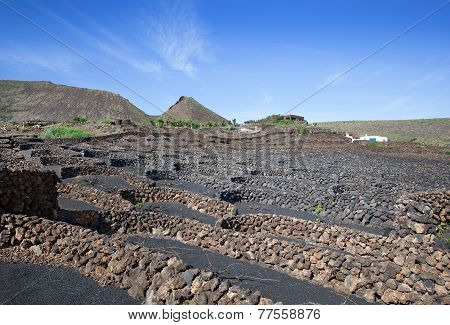 Vineyard on Lanzarote
