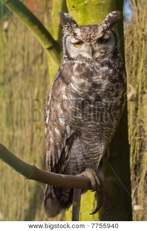 Owl Sitting On Branch
