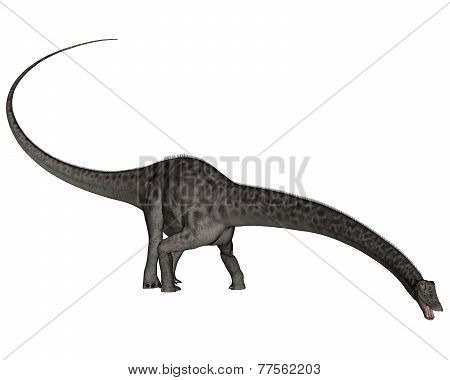 Diplodocus dinosaur head down - 3D render