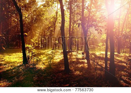 Beautiful sunrise in the forest with light shafts and shadows