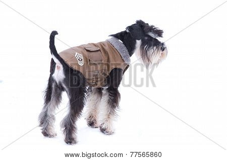 Dog In Jacket