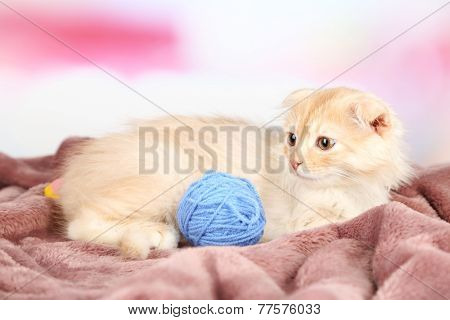Cute little Scottish fold kitten on plaid with skein of thread