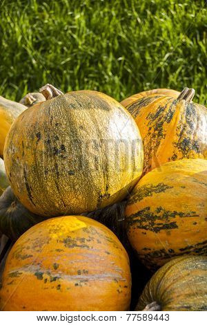 Oil Lady Godiva Cucurbita Pumpkin Pumpkins From Autumn Harvest