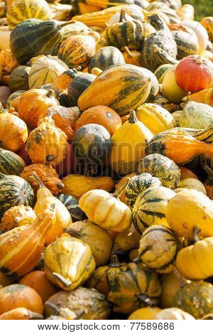 Decoration Mini Pumpkin Cucurbita Pumpkin Pumpkins From Autumn Harvest