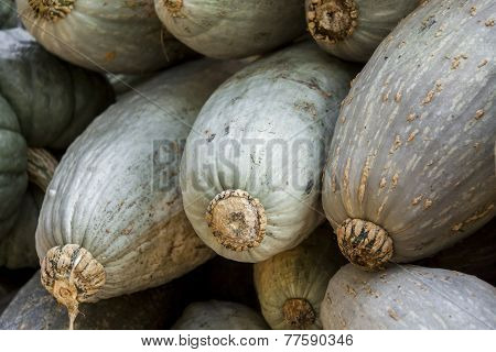 Blue Banana Grey Banana Cucurbita Pumpkin Pumpkins From Autumn Harvest