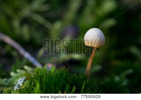 Tiny mushroom with green background