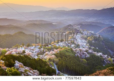 Yoshinoyama, Nara, Japan view of town and cherry trees during the spring season.