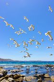 stock photo of swarm  - swarm of sea gulls flying close to the beach of mykonos islandGreece