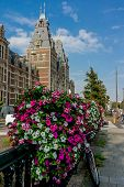 picture of tourist-spot  - In late summer pink and white flowers bloom in abundance in front of a tourist spot in Amsterdam - JPG