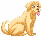 picture of hairy tongue  - A cute dog panting on a white background  - JPG