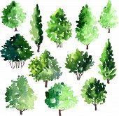 foto of linden-tree  - set of different deciduous trees - JPG