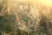 picture of spider web  - Closeup of a spider web on a foggy morning - JPG
