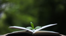 picture of cognitive  - book or notebook with leaves on nature background - JPG