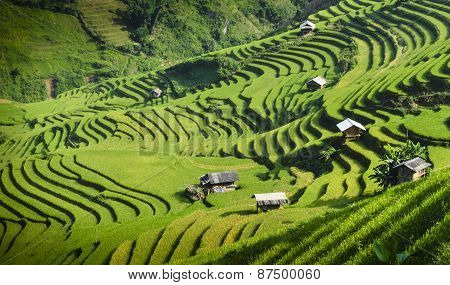 Rice fields on terraced at Mu Cang Chai, Yen Bai, Vietnam