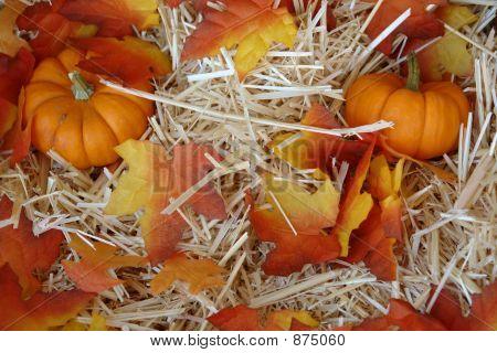 Fall Pumkins