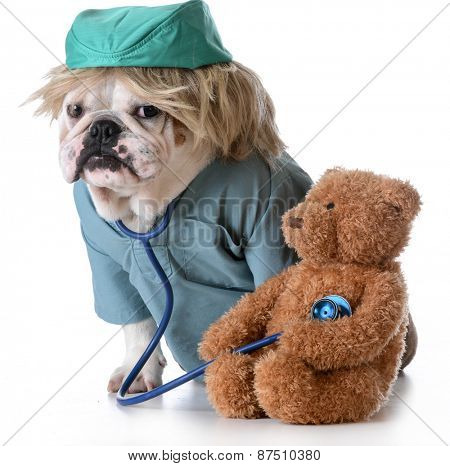 veterinary care - bulldog dressed like a doctor listening to the heart of a stuffed bear