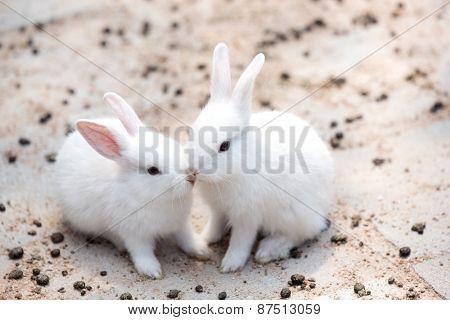 Funny Baby White Rabbit