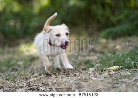 Puppy Dog Running Playful Jumping Outdoors