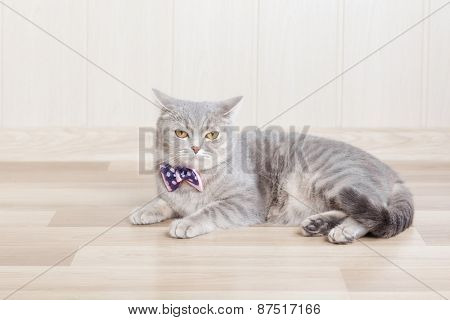 gray striped cat lies on the floor with a beautiful bow at the neck