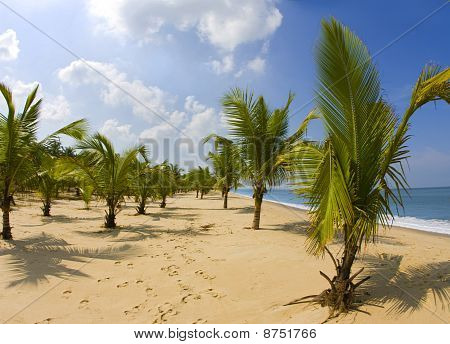 Palm Trees Hanging Over A Sandy White Beach With Stunning Blue Waters