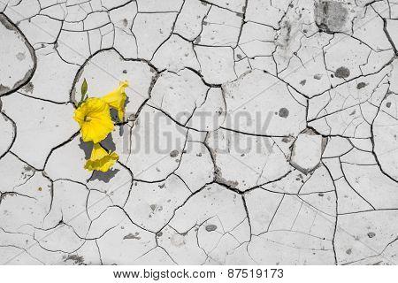 Flower on cracked ground