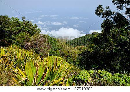 Mountain High Vegetation