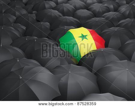 Umbrella With Flag Of Senegal