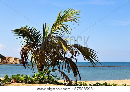 Asia In   Bay The  Koh Phangan  Isle White  Beach