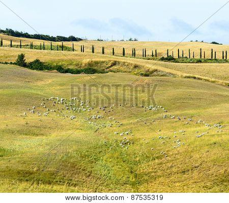 Crete Senesi (tuscany)
