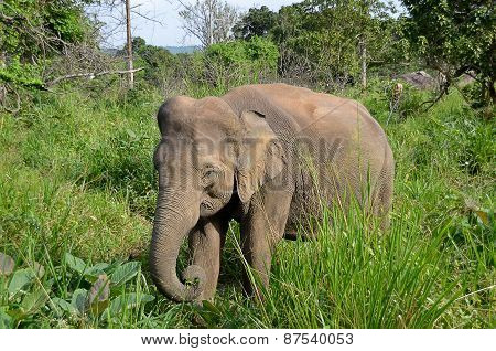 Little Gray Elephant Hiding In Green Grass In Nature