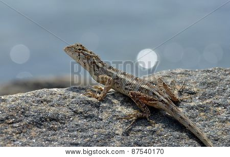 Little Lizard On The Rock Watching In Nature Detail Photo