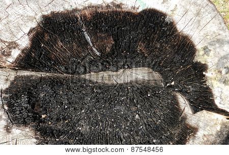 burned tree stump