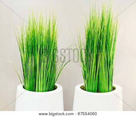 Decorative Green Grass In White Vases