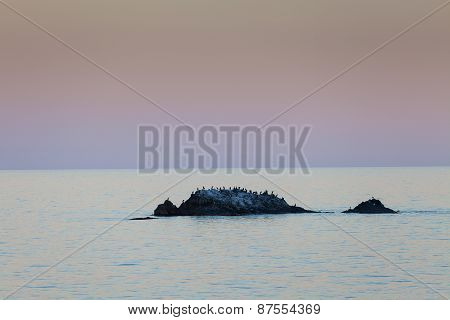 Stone island with birds in the sea at sunset