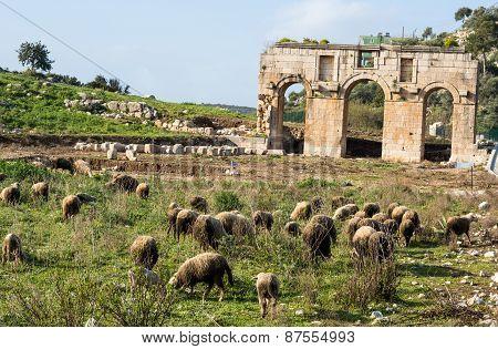 Ruins Of Ancient City Of Patara. Turkey.