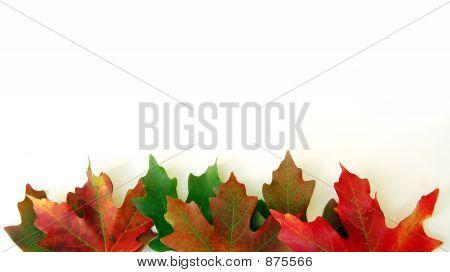 Fall Leaf Edge