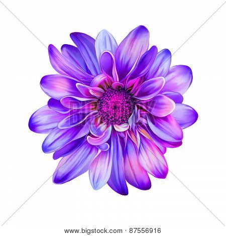 Bright Purple pink Mona Lisa flower, Spring flower.Isolated on white background