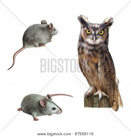 Pretty Owl sitting on a log cute white mouse holding cheese on white background