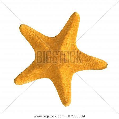 Yellow Starfish Isolated On White