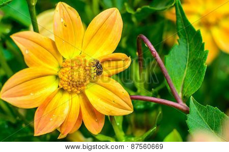 beautiful flower with a bug