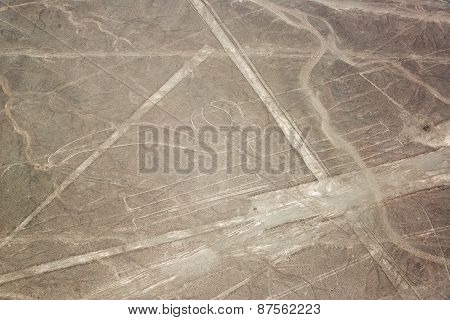 Nazca Lines Parrot