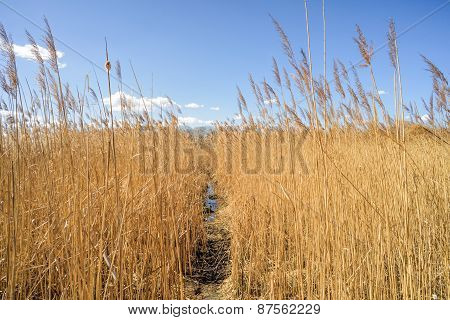 Path Through The Reeds