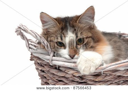 Cat Lies In A Wicker Basket On A White Background