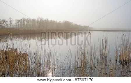The shore of a foggy lake in spring