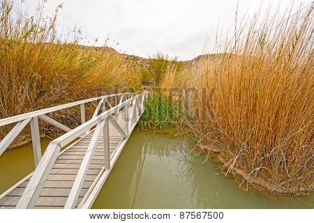 Footbridge Across A Wetland Pond
