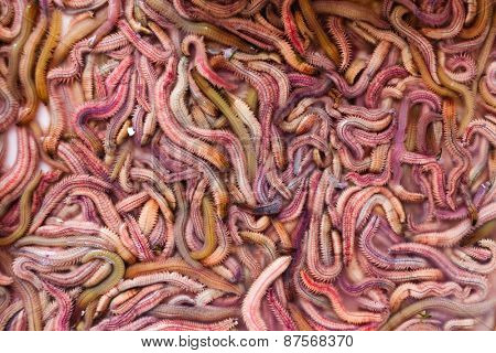 Sand worms in Vietnamese market, ingredient for local traditional food