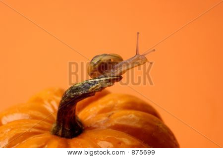 Orange Snail Pumpkin