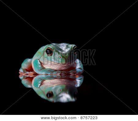 Verde rana sentada en superficie espejada
