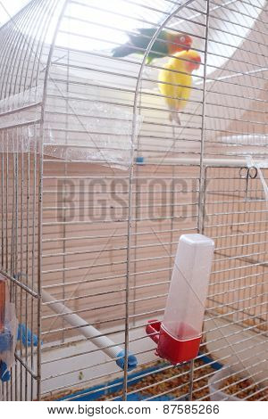 Couple parrots in bird cage